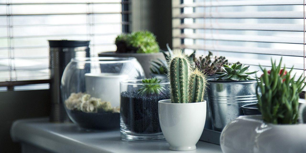 Cómo decorar interiores con flores y plantas